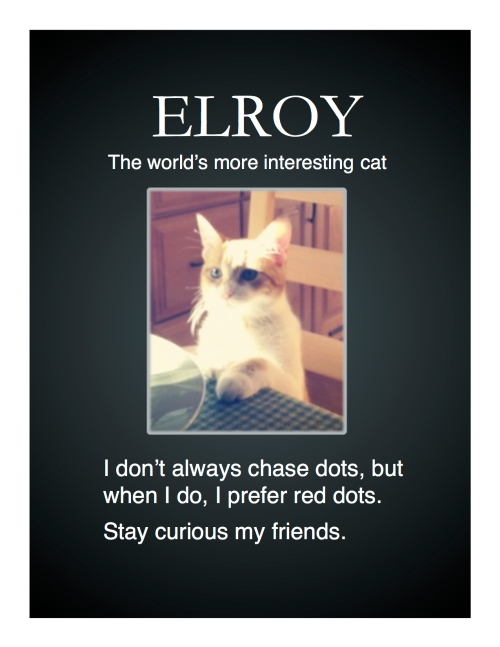 Elroy, The World's Most Interesting Cat